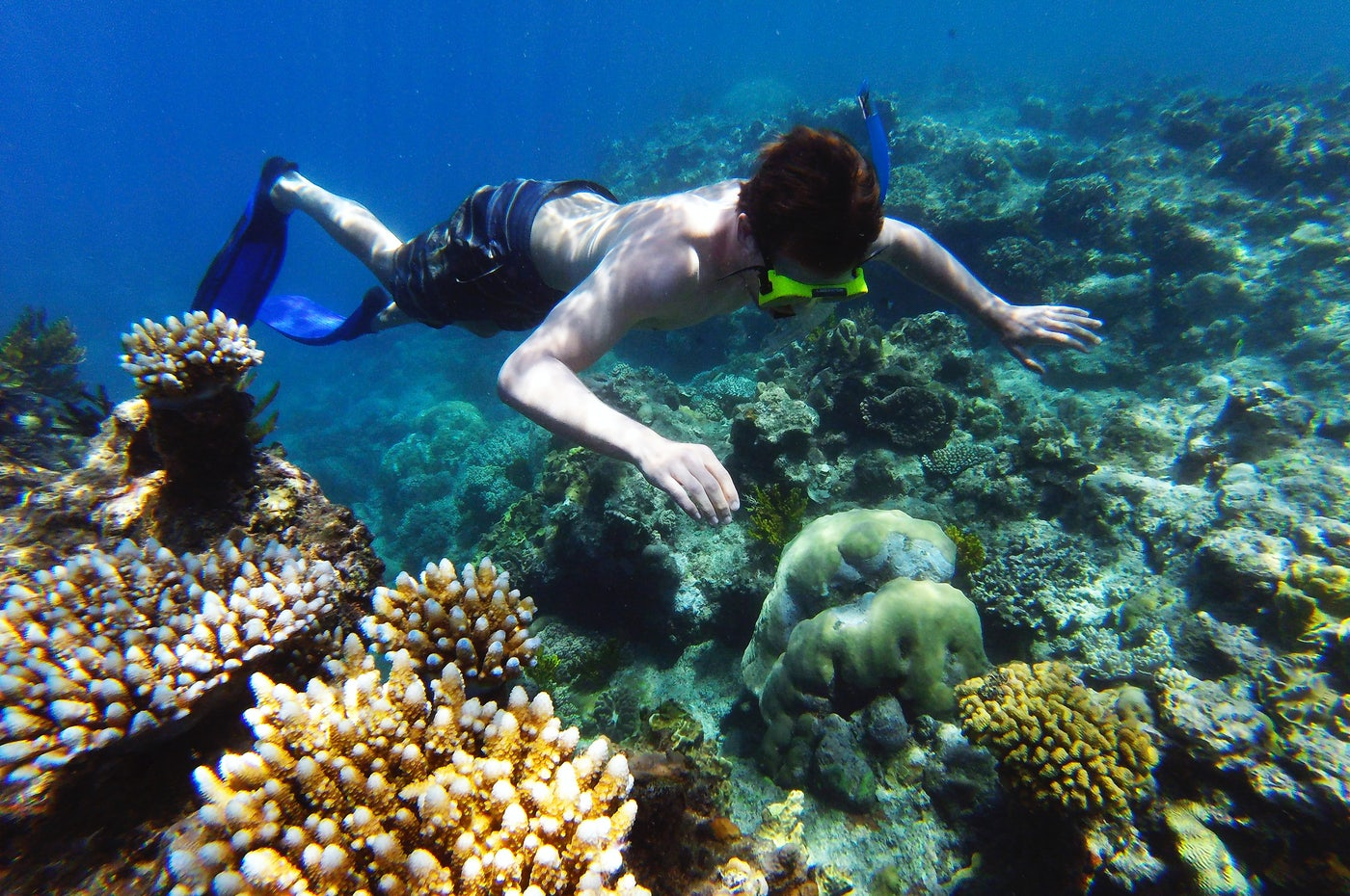 snokelling in the great barrier reef cairns