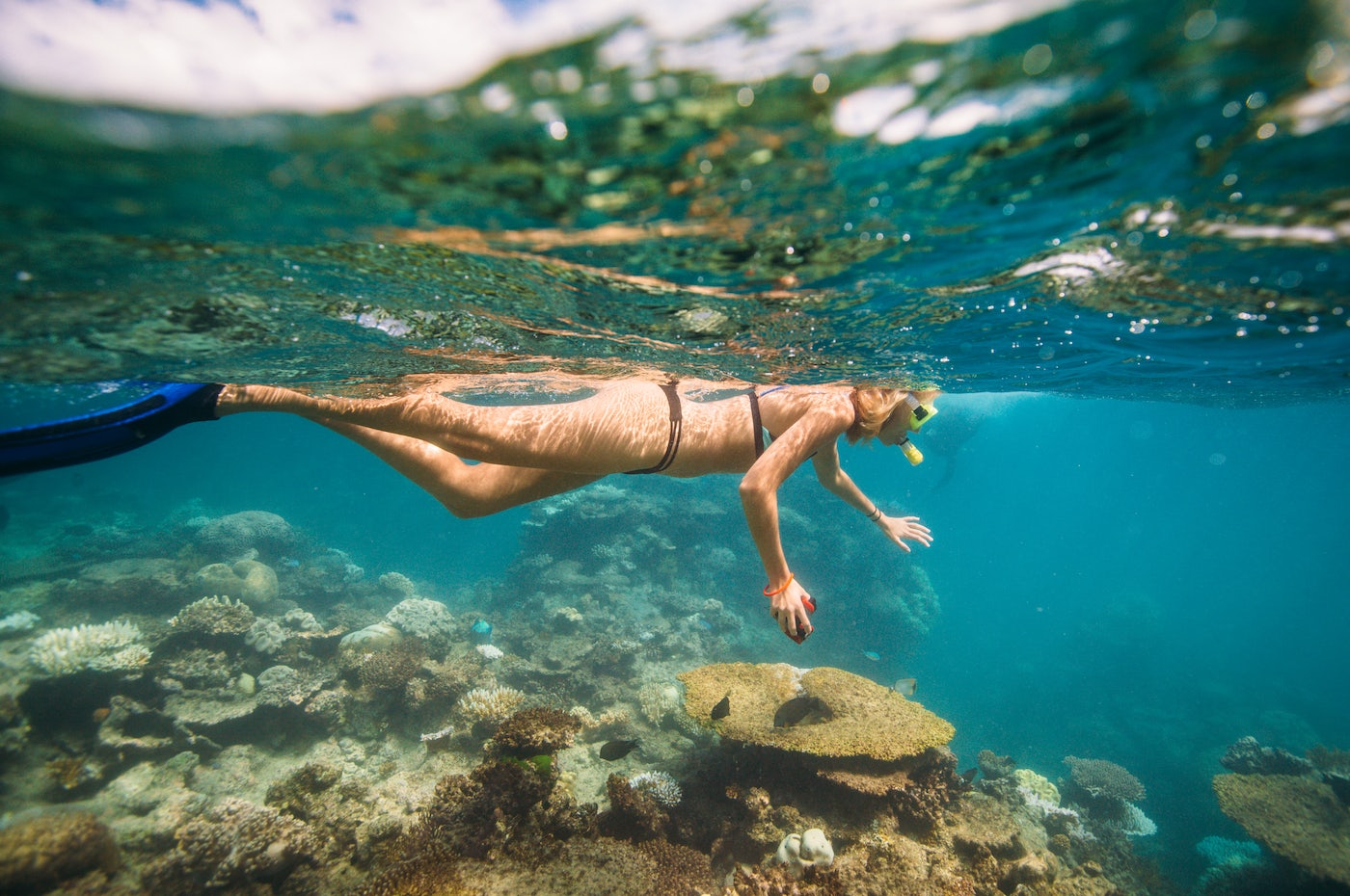 Snorkeling at the Great Barrier Reef Cairns